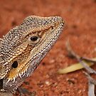 Central Bearded Dragon by robynart