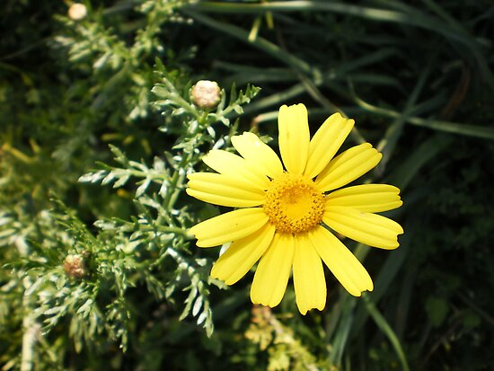 sunny flower by Lida