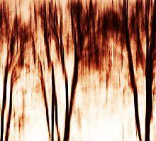 shadows of trees I by novopics