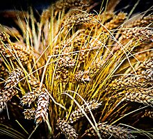Sheaf Of Wheat - Thank You by luckypixel