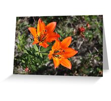 Rocky Mountain Lily Greeting Card