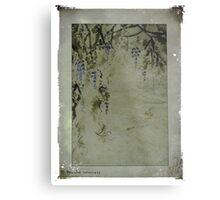 The beauty of wisteria Metal Print