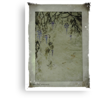 The beauty of wisteria Canvas Print