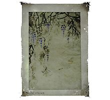 The beauty of wisteria Photographic Print