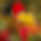 Autumn flowers by Bluesrose
