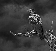THE WATCHMAN by Sandy Stewart