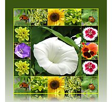 End of Summer Floral Collage in Reflection Frame Photographic Print