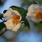 Blossom by Jennifer P. Zduniak