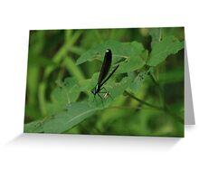 Damsel Fly Greeting Card