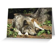 Timber Wolf Chilling Out Greeting Card