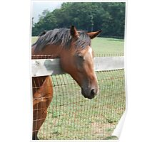 Horse looking over fence  Poster