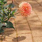 Flower and Shadow on Brick walk by Jennifer P. Zduniak