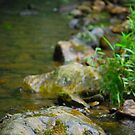 Rocks in a line in the stream by Jennifer P. Zduniak