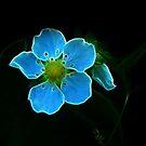 Pan's Magical Flower by Atılım GÜLŞEN