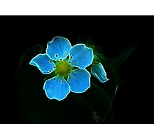 Pan's Magical Flower Photographic Print