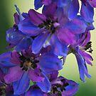 Purple Flowers close up by Jennifer P. Zduniak