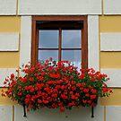 An Austrian Window. by Lee d'Entremont