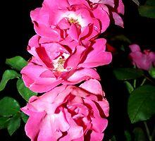 Botany 6 by Roddy Fitzgerald