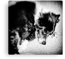 Sleeping Dog 2 Canvas Print