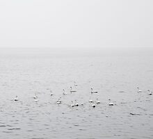 whoopers by helveticaneue