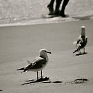 Delaware Beaches by Jennifer P. Zduniak