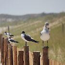 Gulls on Fence by Jennifer P. Zduniak