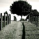Stand alone Tree by Jennifer P. Zduniak