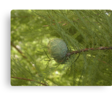 UNA PIGNA , una sequoia, un parco... Parma ITALIa-europa-. 2000 VISUALIZZAZ.MAGGIO 2013 .. VETRINA RB 25 SETTEMBRE 2012 --- Canvas Print