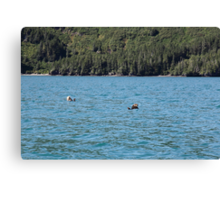 Northern Sea Otters Canvas Print