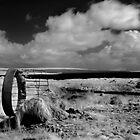 Cow Feeder - Carrowmore Lake, Mayo by Dave  Kennedy