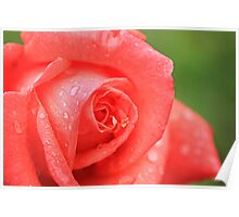 Raindrops on Roses Poster