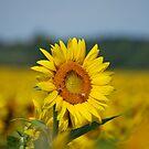 Sunflower and Beez by Jennifer P. Zduniak