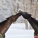 Horses in love by Jennifer P. Zduniak