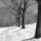 Farm Treeline by Jennifer P. Zduniak