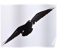 Yellowstone 2011- Raven  Poster