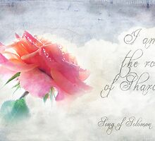 Rose of Sharon by Olga