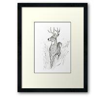 Buck in Calm Flight Framed Print