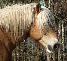 Palomino Horse Lover Equine  by NaturePrints