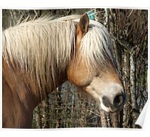 Palomino Horse Lover Equine  Poster