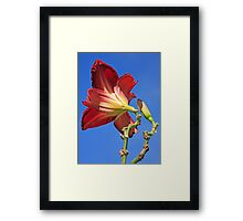 Red Lily and Blue Sky Framed Print
