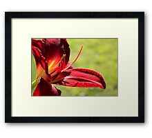 Red Lily Side View Framed Print