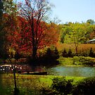 The Little Pond in Fall by teresa731