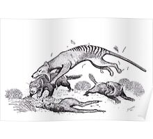 Thylacine attacking devils Poster
