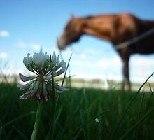 clover by Erinn Mcneilly