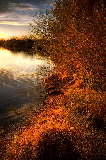 By The Evening's Golden Glow by Saija  Lehtonen
