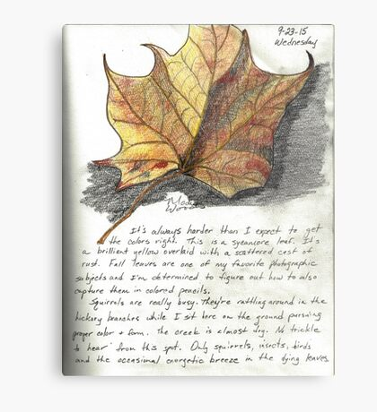 Nature Sketching Day 3- Yellow Sycamore Leaf Metal Print