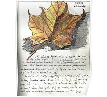 Nature Sketching Day 3- Yellow Sycamore Leaf Poster