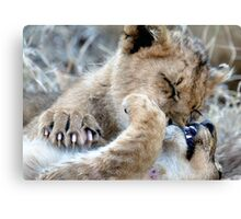 Mom, He Is Biting My Nose Again! Canvas Print