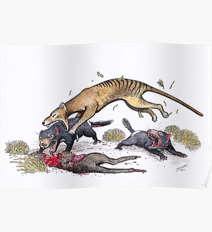 Thylacine attacking the devil Poster