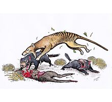 Thylacine attacking the devil Photographic Print